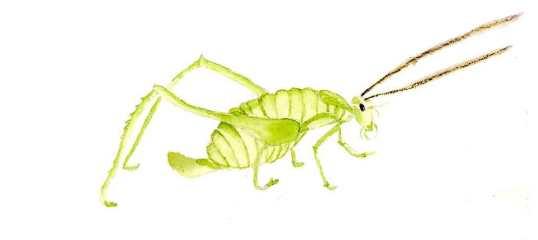 green-bug