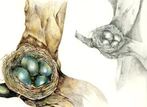 pencil birds nest
